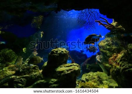 Beautiful underwater inhabitants in the aquarium, marine background