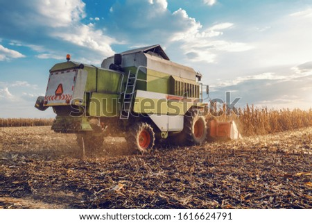 Side view of harvester in corn field harvesting in autumn. Husbandry concept. #1616624791