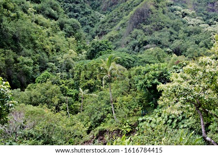 Looking at view of tropical rain forest with diversified leaf and lush foliage #1616784415