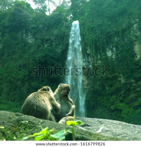 Monkeys Lice-picking Under a Scenic Waterfall. Wild Monkeys playing by a Waterfall.