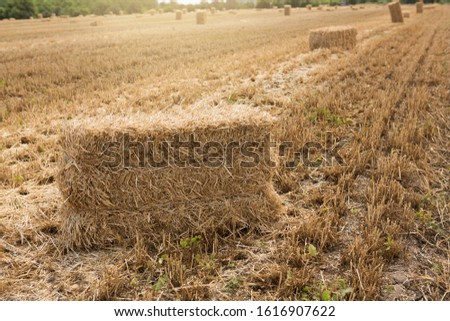 many bales of golden straw lie on farmland, one bale closeup, selective focus, concept #1616907622