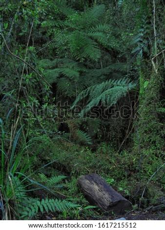 Dense lush rain forest growth #1617215512