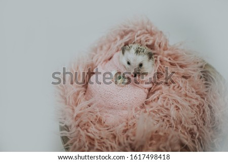 Cute tiny hedgehog being adorable  #1617498418
