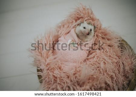 Cute tiny hedgehog being adorable  #1617498421