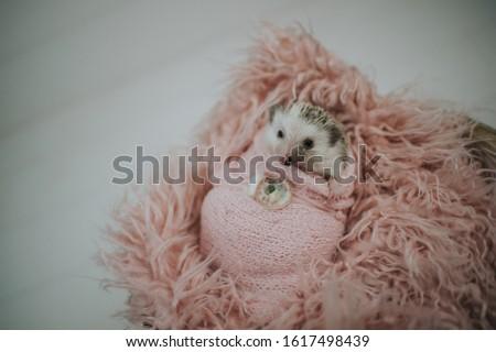 Cute tiny hedgehog being adorable  #1617498439