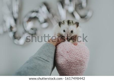Cute tiny hedgehog being adorable  #1617498442