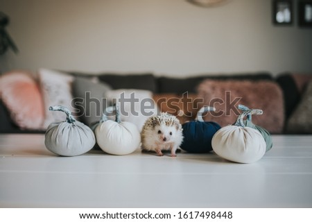 Cute tiny hedgehog being adorable  #1617498448