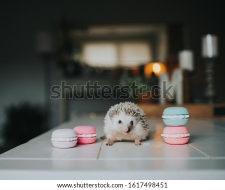 Cute tiny hedgehog being adorable  #1617498451