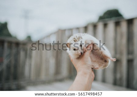 Cute tiny hedgehog being adorable  #1617498457