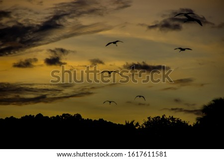 Silhouettes of birds against the background of a tropical forest and a tropical sunset. The coast of the Indian ocean, exotic destination #1617611581