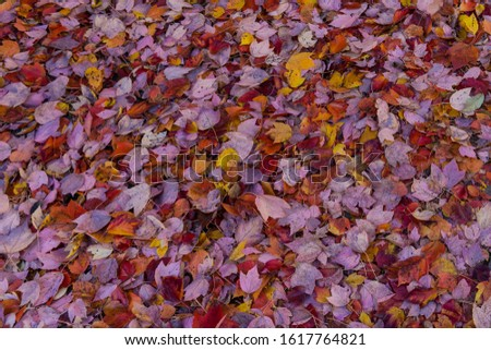 Fall leaves on the ground #1617764821