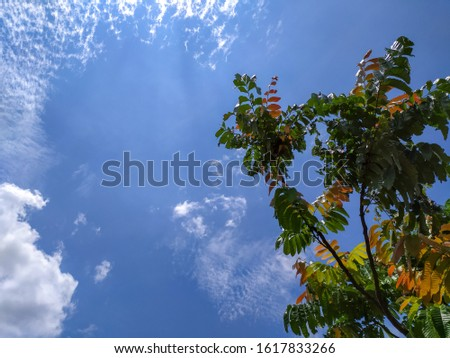 tree branches,blue sky and white clouds,good use for weather report info. #1617833266