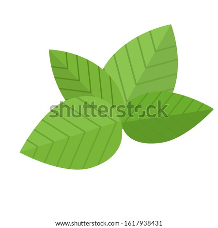 Basil. Four leaves of green basil, directed to the sides. Flat style. #1617938431