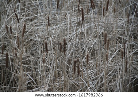 Reed bed and lake forest during winter #1617982966
