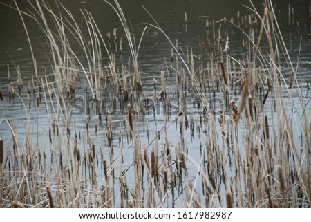 Reed bed and lake forest during winter #1617982987