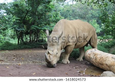 Image of rhino wildlife photography #1618024573