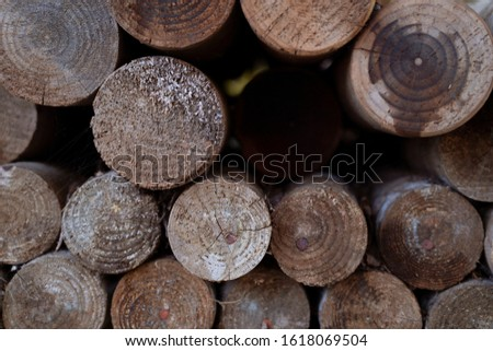 Tree trunks. Tree cross section #1618069504