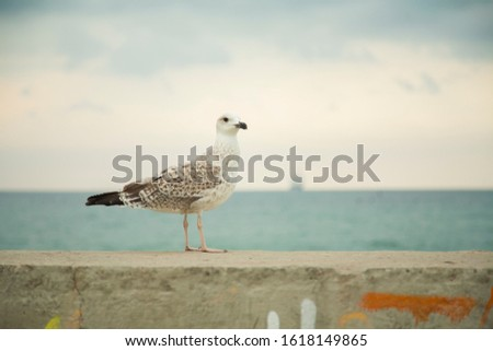 Seagull on the background of the sea,Seagull and the sea, sea gull   #1618149865