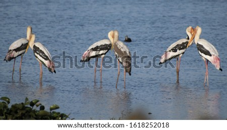 image of painted storks gathered in a pattern. the painted stork is a large wader in the stork family. #1618252018