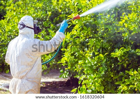 Weed insecticide fumigation. Organic ecological agriculture. Spray pesticides, pesticide on fruit lemon in growing agricultural plantation, spain. Man spraying or fumigating pesti, pest control. #1618320604