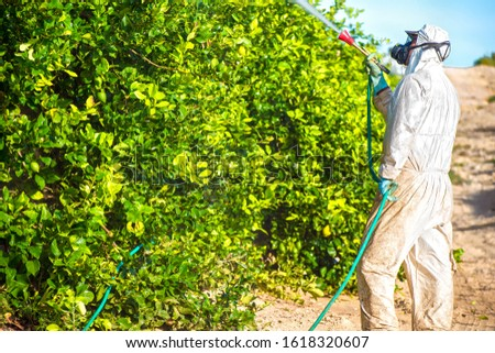 Weed insecticide fumigation. Organic ecological agriculture. Spray pesticides, pesticide on fruit lemon in growing agricultural plantation, spain. Man spraying or fumigating pesti, pest control. #1618320607