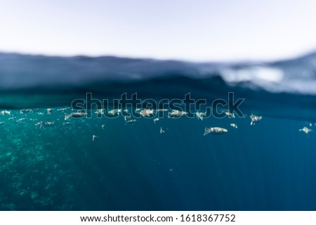 Half under half over water photography in the beautiful ocean of egypt #1618367752