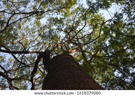 tree bottom pic with vivid colors and blue sky, sky filled with tree leaves and branches looking very interesting.