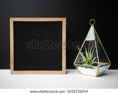 Black felt letterboard sign with succulent inside gold terrarium - blank, perfect for photoshopping your own message