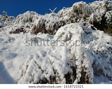 First pics of snow fall in 2020 in Indian hills areas.
