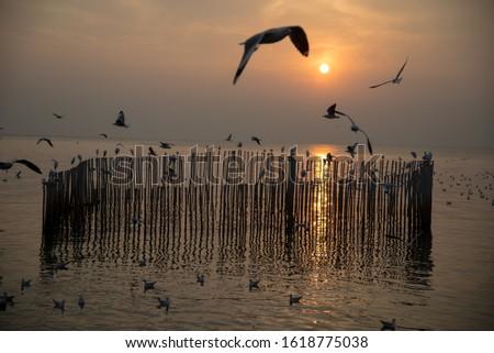 Sunset sea horizon landscape. Seagull silhouette sunset sea horizon. Sunset sea horizon view. Sunset horizon sea #1618775038