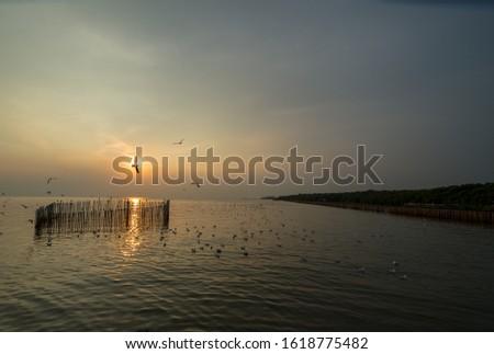 Sunset sea horizon landscape. Seagull silhouette sunset sea horizon. Sunset sea horizon view. Sunset horizon sea #1618775482