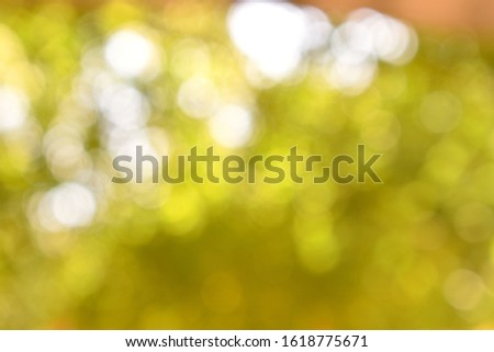 Greenish and golden brown abstract and blurred background picture of a tree and leafs. Good picture for backgrounds and templates use.