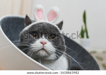 Cat disguised as a rabbit, so cute Royalty-Free Stock Photo #1618863982