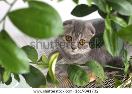 cat kitty gray  #1619041732