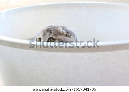 cat kitty gray #1619041735