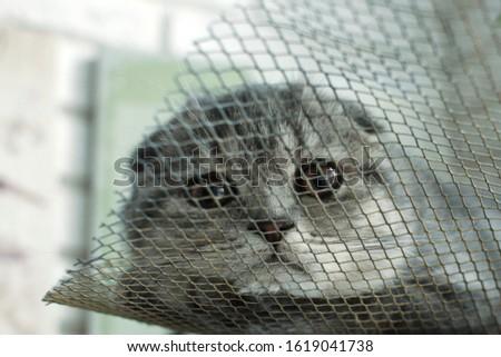 cat kitty gray  #1619041738