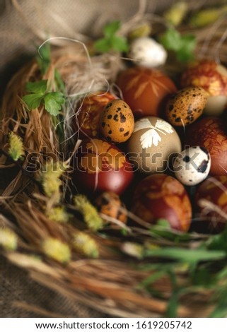 Spring and Easter holiday greeting card concept. Decorated easter eggs in a nest with willow branch