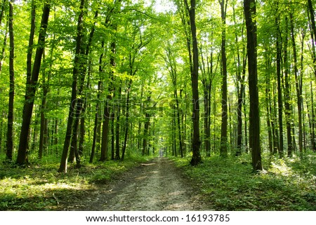 Green enchanted forest path #16193785