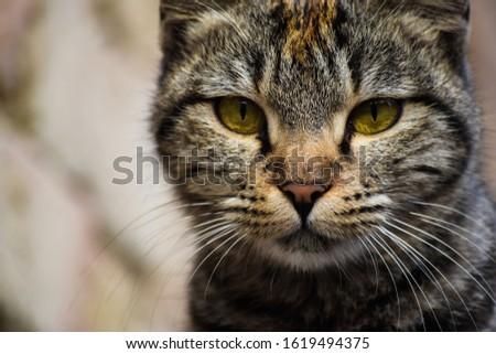 wild life animal cat pic