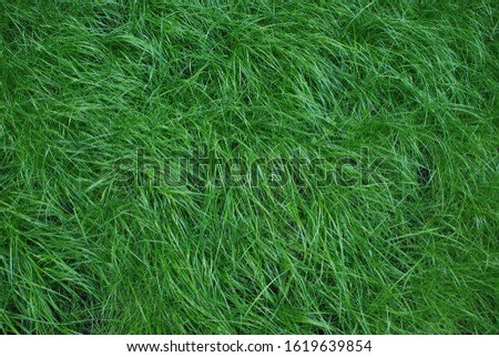 Nice and soft grass texture, looks like a feather softness. #1619639854