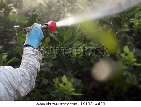 Weed insecticide fumigation. Organic ecological agriculture. Spray pesticides, pesticide on fruit lemon in growing agricultural plantation, spain. Man spraying or fumigating pesti, pest control. #1619814439