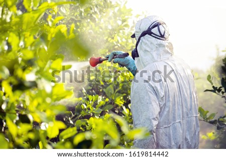 Weed insecticide fumigation. Organic ecological agriculture. Spray pesticides, pesticide on fruit lemon in growing agricultural plantation, spain. Man spraying or fumigating pesti, pest control. #1619814442