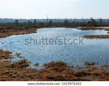 simple swamp landscape with swamp grass and moss in the foreground, small swamp pond and swamp pines in the background, blurry background