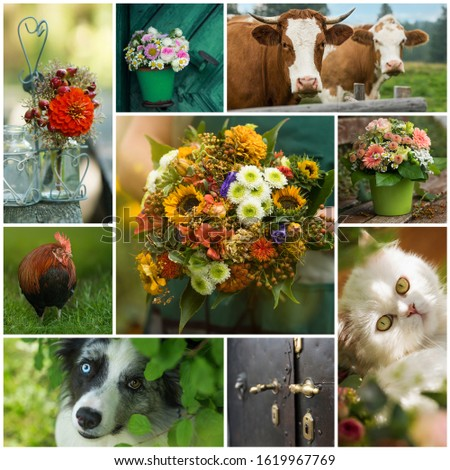 Collage of different countryside pictures in the summer garden