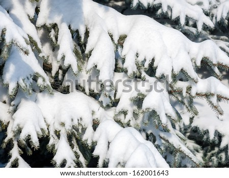 snowy fir tree branches as background #162001643