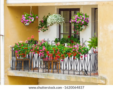 balcony garden. flowers on the balcony. Many colors adorn the balcony of the apartment in the old house. Summer sunny day. Royalty-Free Stock Photo #1620064837