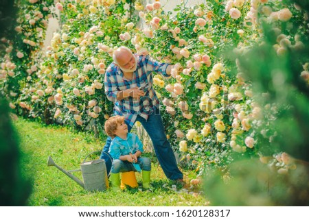 Flower rose care and watering. Grandfather with grandson gardening together. Gardening with a kids. Bearded Senior gardener in an urban garden #1620128317