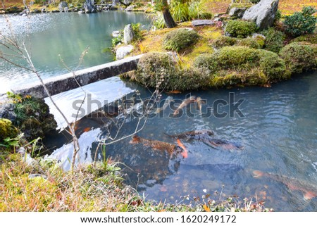 Koi in Japanese garden pond, Concept for Japanese landscape design. Zen Nature background. Tranquil and peaceful carp in the lake. #1620249172
