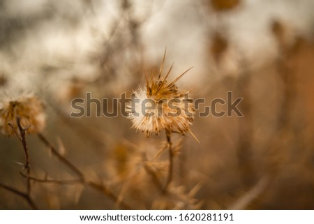 Desert Flowers pic with focus