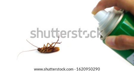 Cockroaches die with insecticides,pest control spraying insecticide on cockroach. #1620950290